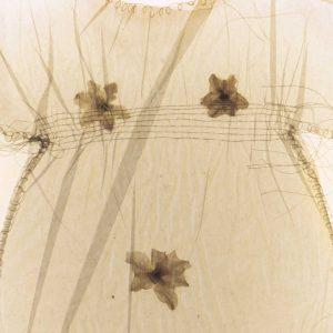 dress fopr web